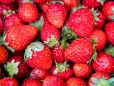 Woonunits bij aardbeienkweker Nieuwaal voor eigen personeel