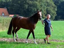 Concours Hoonhorst ten elfde ure afgelast door te weinig animo: 'Een enorme domper'