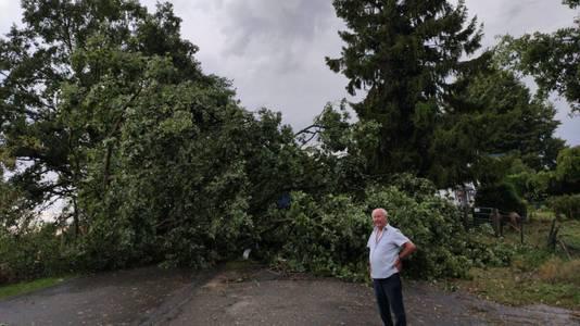 Omgewaaide boom in de buitenpolder van Haalderen in de Betuwe.