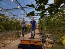 Tuinders in IJsselmuiden luiden noodklok: 'Energie straks niet meer te betalen'