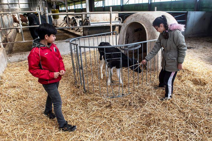De kinderen van weekendschool 'petje af' brengen een bezoek aan de zuivelboerderij van de familie Van Sundert in Dorst.