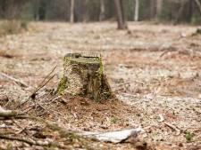 Tijd van grootschalige bomenkap in de Achterhoek is voorbij