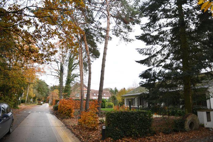 Rotselaar gaat vanaf januari illegale bomenkap strenger controleren