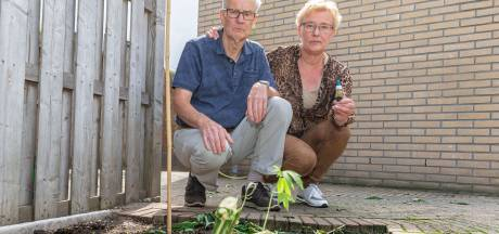 Twijfels over handelen politie bij verwijderen wietplanten uit tuin ouder echtpaar in Hasselt