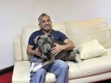 Cesar Millan walgt van mensen die spuitje willen voor hond Biden: 'Dan heb je het echt niet begrepen'