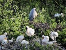 Vogelkijkhut Blauwe Kamer weer open voor publiek