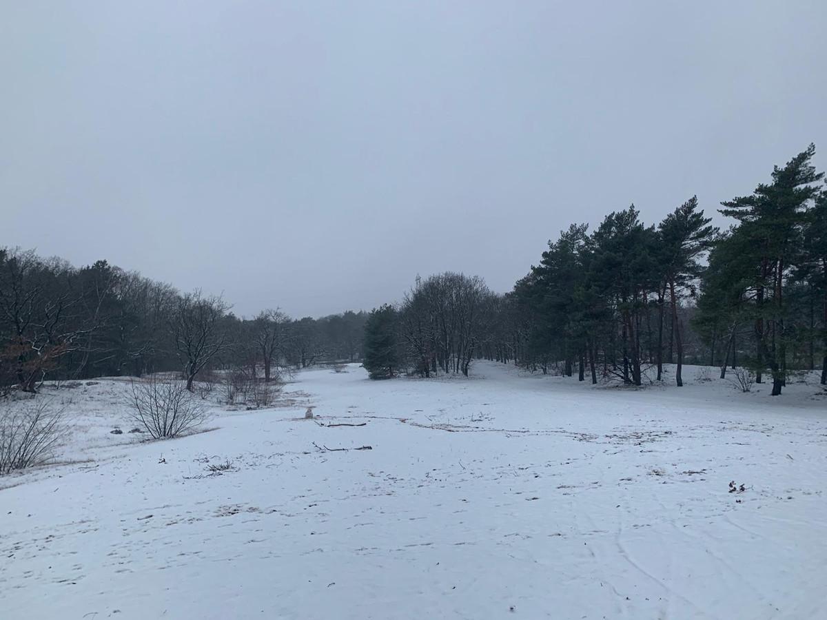 De Bakelse bossen lijken even in Scandinavië te liggen.