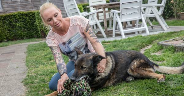 Hond Zoran laat zich niet ontvoeren: 'Zo had ik hem nog nooit gezien'