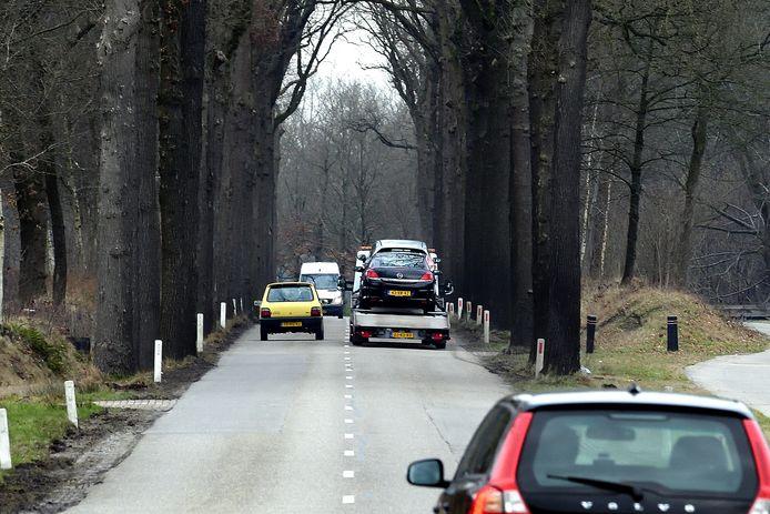 Bomen langs de N638 in Zundert moeten sneuvelen om de weg breder en veiliger te maken