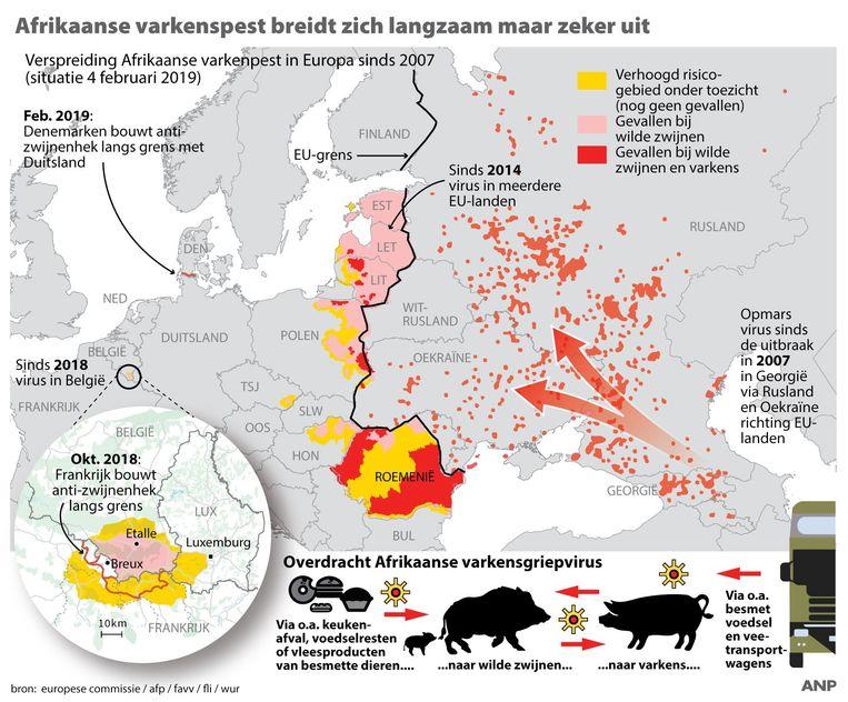 Afrikaanse varkenspest breidt zich langzaam maar zeker uit, overzicht gevallen bij varkens en wilde zwijnen in Europa sinds 2007. Beeld ANP