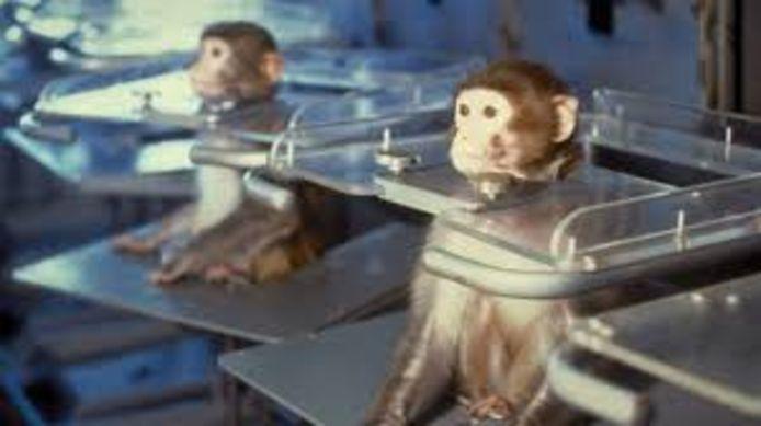 Proefapen in een laboratorium