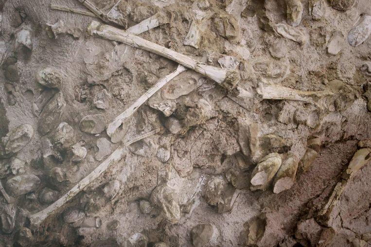 In het noordoosten van China troffen onderzoekers ruim 300 eieren aan. De grootste vondst ooit.