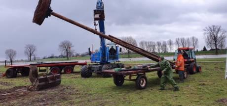 Nieuw uitzicht voor broedende ooievaars in Maas en Waal na verhuizing nesten