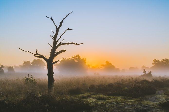 Zonsopgang op de Strabrechtse Heide (lezersfoto). Een prachtige zonsopgang op een koude ochtend op één van de mooiste plekjes in Brabant.