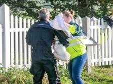 Brandweer redt zwaan met gebroken vleugel in Hoogland