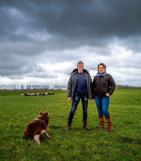 René en Melisa willen schapen laten grazen onder zonnepanelen op 'slechtste grond van Maas en Waal'