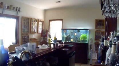 Dit is hét moment waarop een 340l aquarium breekt