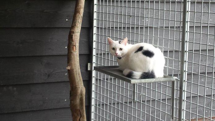 In het buitengebied van Riel komt mogelijk een pension voor honden en katten