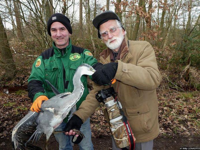 Leden van het Natuurhulpcentrum van Oudsbergen en getuige-fotograaf Willy Lenaerts konden de reiger veilig aan de oever halen
