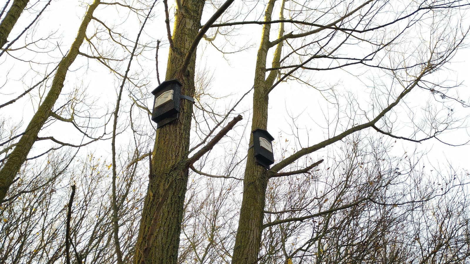 In het stadsbos bij Tholen hangen sinds kort vleermuiskastjes.