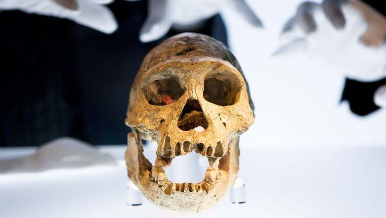 Dmanisi-schedel. Foto ANP Beeld