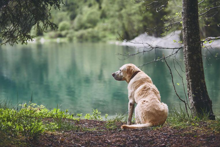 dog-in-forest.jpg