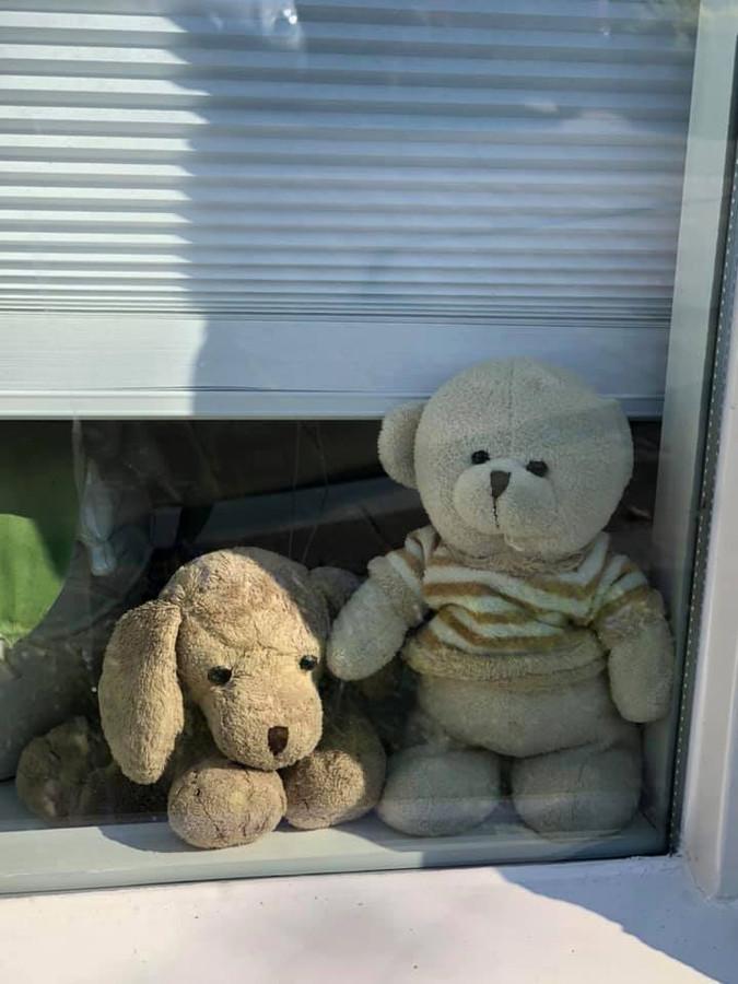Naast en hond wacht op de vensterbank een beertje om door kinderen gespot te worden