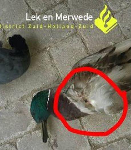 Zo'n tien vogels uit de lucht geschoten met luchtbuks