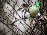 Vetbollen in de Nederlandse tuin, tekenend voor de beschaving die vrede heet