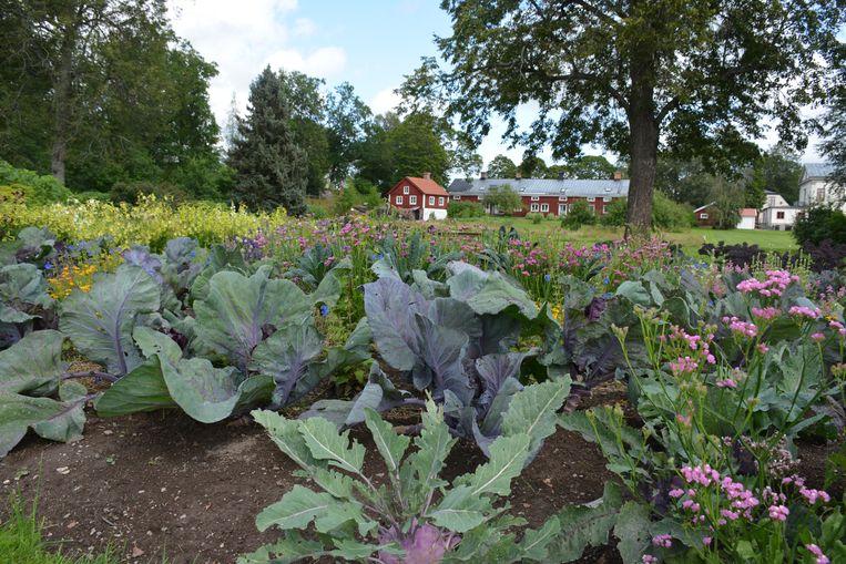 Wij Trädgårdar in Ockelbo is een oud landhuis te midden van mooi aangelegde bloemen- en groentetuinen. Beeld Johan Tuyaerts