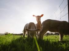 Dit weekend volop lente in Brabant, ook dagen erna blijft het zacht