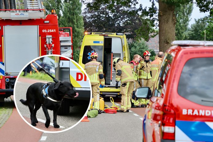 Een hondengeleider van de politie moet er samen met de Dierenambulance aan te pas komen om zwarte labrador Binky weg te halen bij de auto waarin zijn gewonde bazin ligt.
