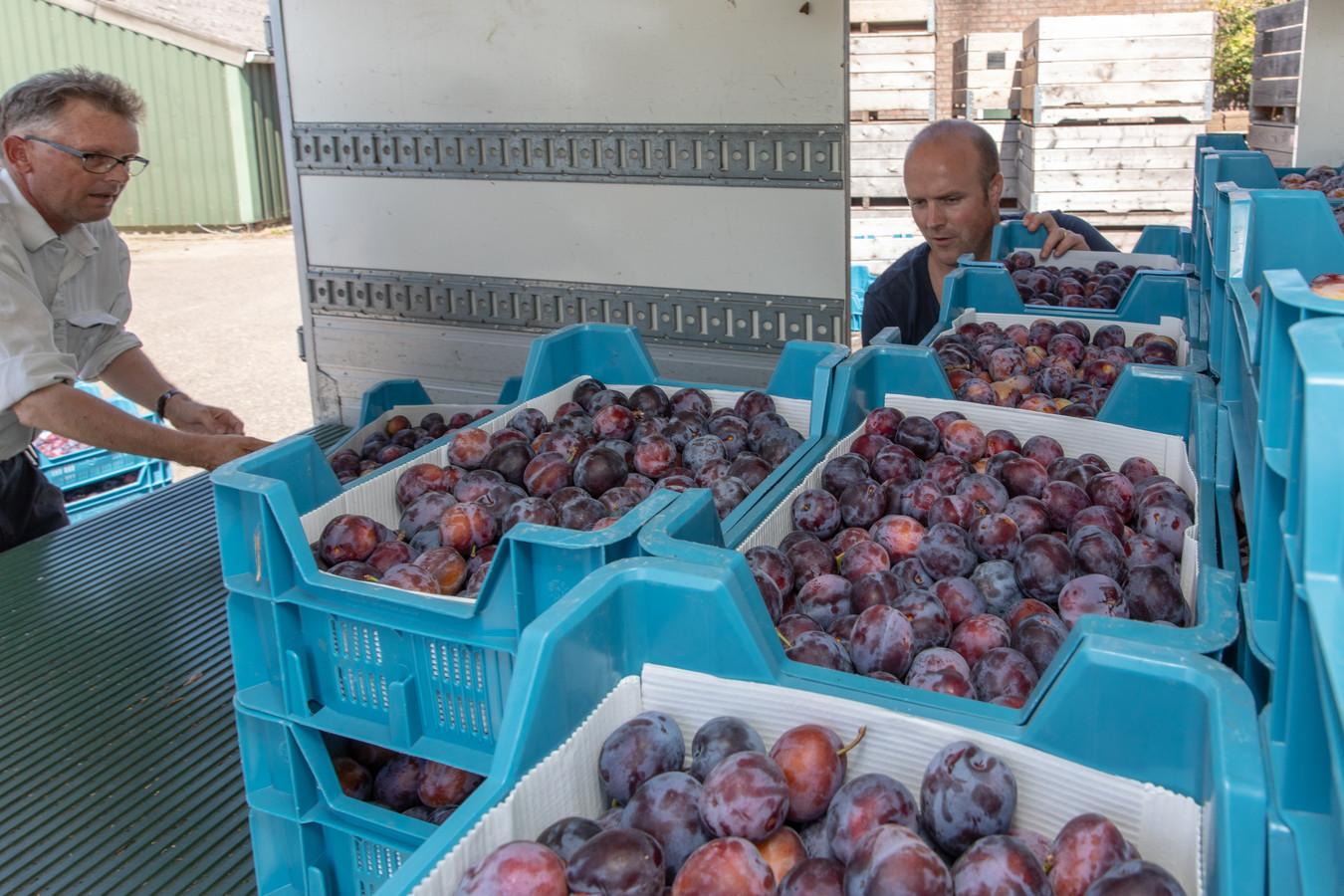 Bart Schoonebeek (r) van Boerschappen uit Breda komt 500 kilo pruimen ophalen bij fruitteler Kees Hamelink in Wemeldinge.