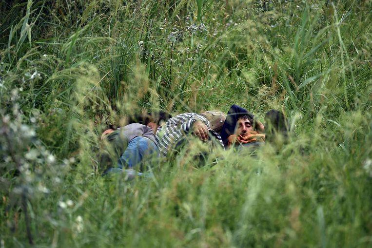 Illegale immigranten rusten uit in het gras bij een verlaten steenfabriek in de buurt van de noordelijke Servische stad Subotica.