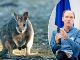 """Een wallaby of vogelspin als huisdier? Expert dierenwelzijn legt uit: """"Een dier illegaal in huis houden kan een boete opleveren die kan oplopen tot 16.000 euro"""""""