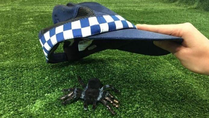 De enige spin die de agentes in de camper konden ontwaren.