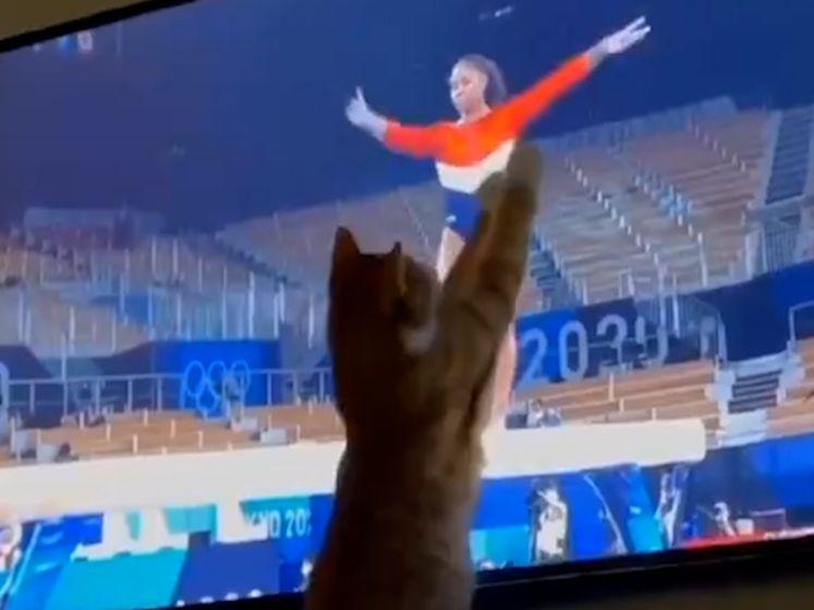 Deze kat is de grootste (én pluizigste) fan van de Olympische Spelen