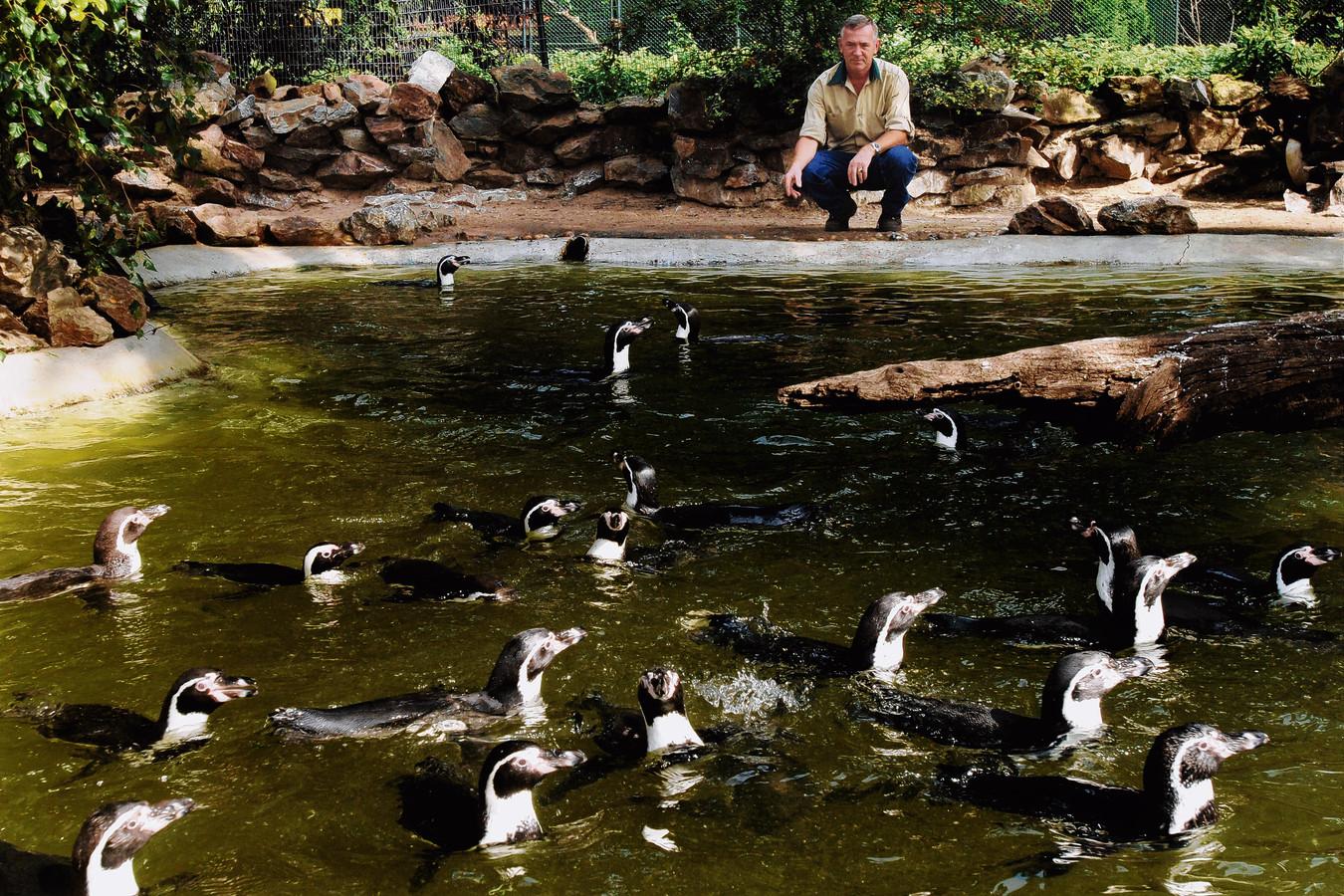 De kolonie humboldtpinguins in Avifauna.