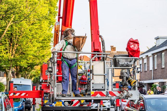 Brandweer schiet imker te hulp bij verwijderen van bijennest in Tilburg.