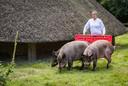 Speciale varkens werden terug gekweekt om mee te spelen in de serie