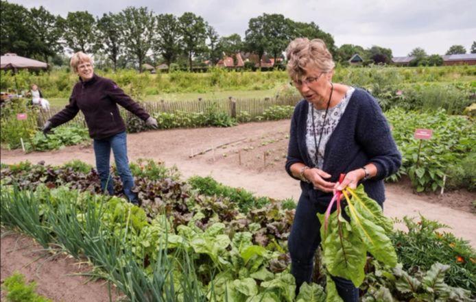 Hennie Zwierzynski (rechts) is graag aan het werk in 't Oale Höfke. De oogst van de biologische tuin in Noordijk was vorig jaar goed.