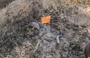 Archeologen vermoeden dat er wel 5.000 skeletten kunnen gevonden worden.