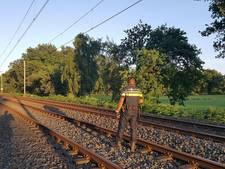 Agenten zoeken vergeefs naar koe op spoor