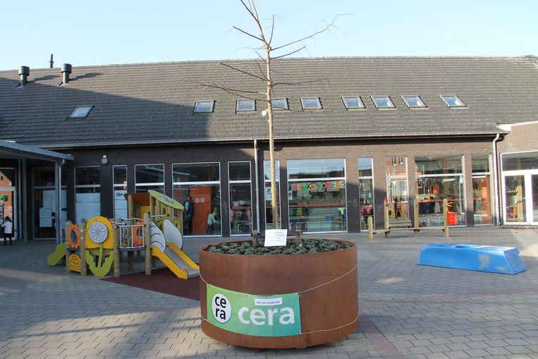 De kleuters van de Ginsteschool vieren Dikke Truiendag met aandacht voor het klimaat. Op de speelplaats plantten ze met steun van Cera een linde aan.