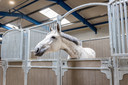 De paarden hebben een ruime stal gekregen met een goede ventilatie.