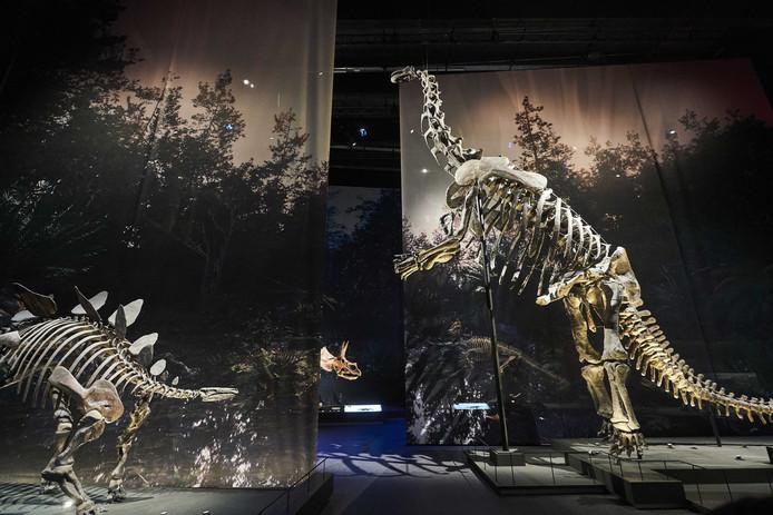 Imposante opstelling van dinosaurusskeletten in de tentoonstelling tijdens de preview van Naturalis.
