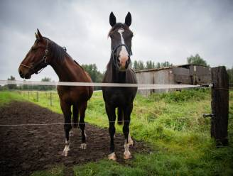 Zandhoven gelast jaarmarkt en paardenwijding af
