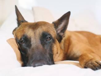 """Baasjes verhuizen, maar laten hond achter: """"Geen enkel dier verdient zo eenzaam te leven"""""""