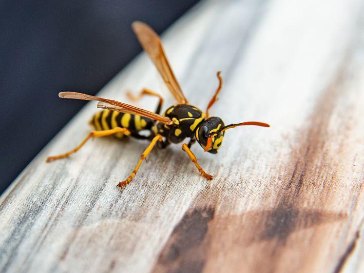 """""""Bierdrinkers worden vaker gestoken"""": hoe voorkom je dat je gebeten wordt nu het insectenseizoen begonnen is?"""