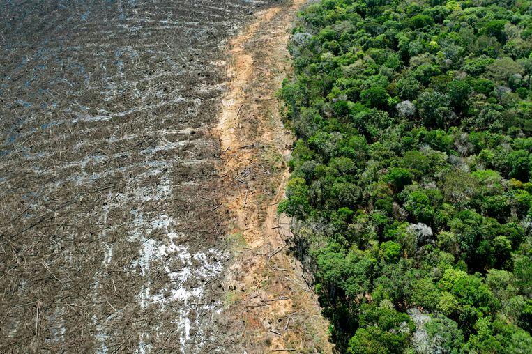 Een ontbost gebied bij Sinop, in de deelstaat Mato Grosso. Beeld AFP